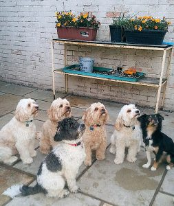 dogs outside at Hills Home Boarding
